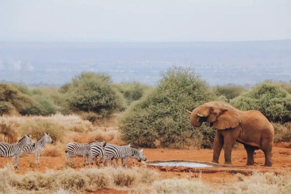 Elephant at Amboseli Bush Camp Watering Hole