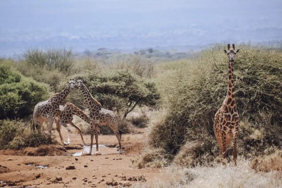Nairobi to Amboseli Bush Camp