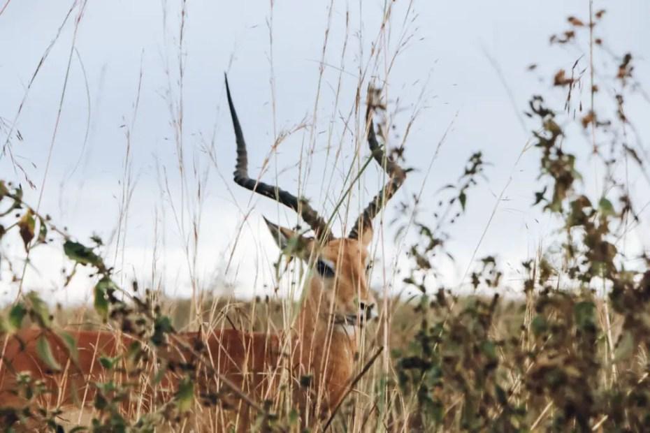 Animals in Nairobi National Park