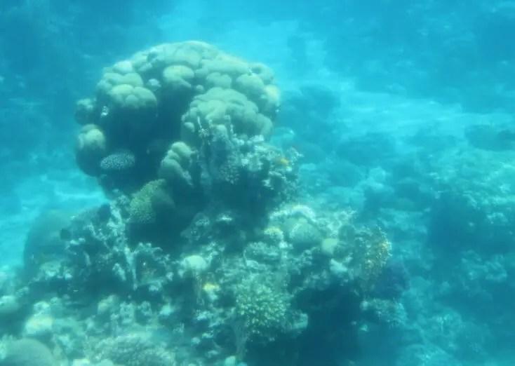 Corals in the Red Sea, Aqaba, Iordania