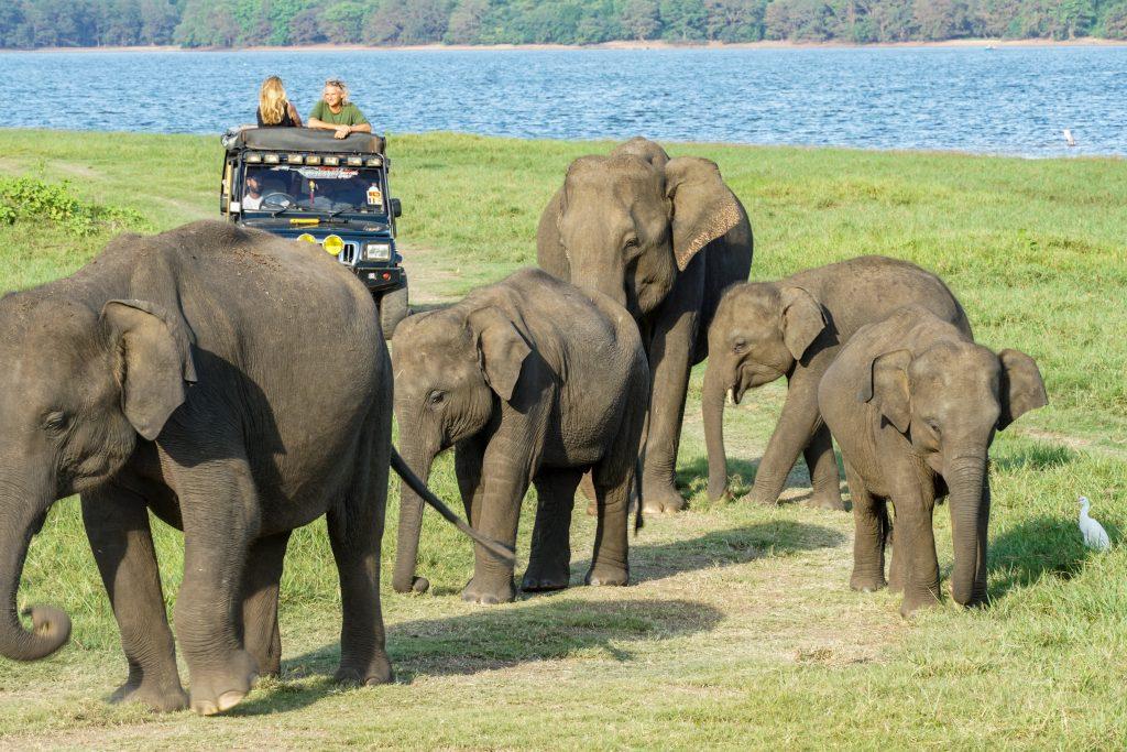 olifanten van Minneriya Nationaal Park