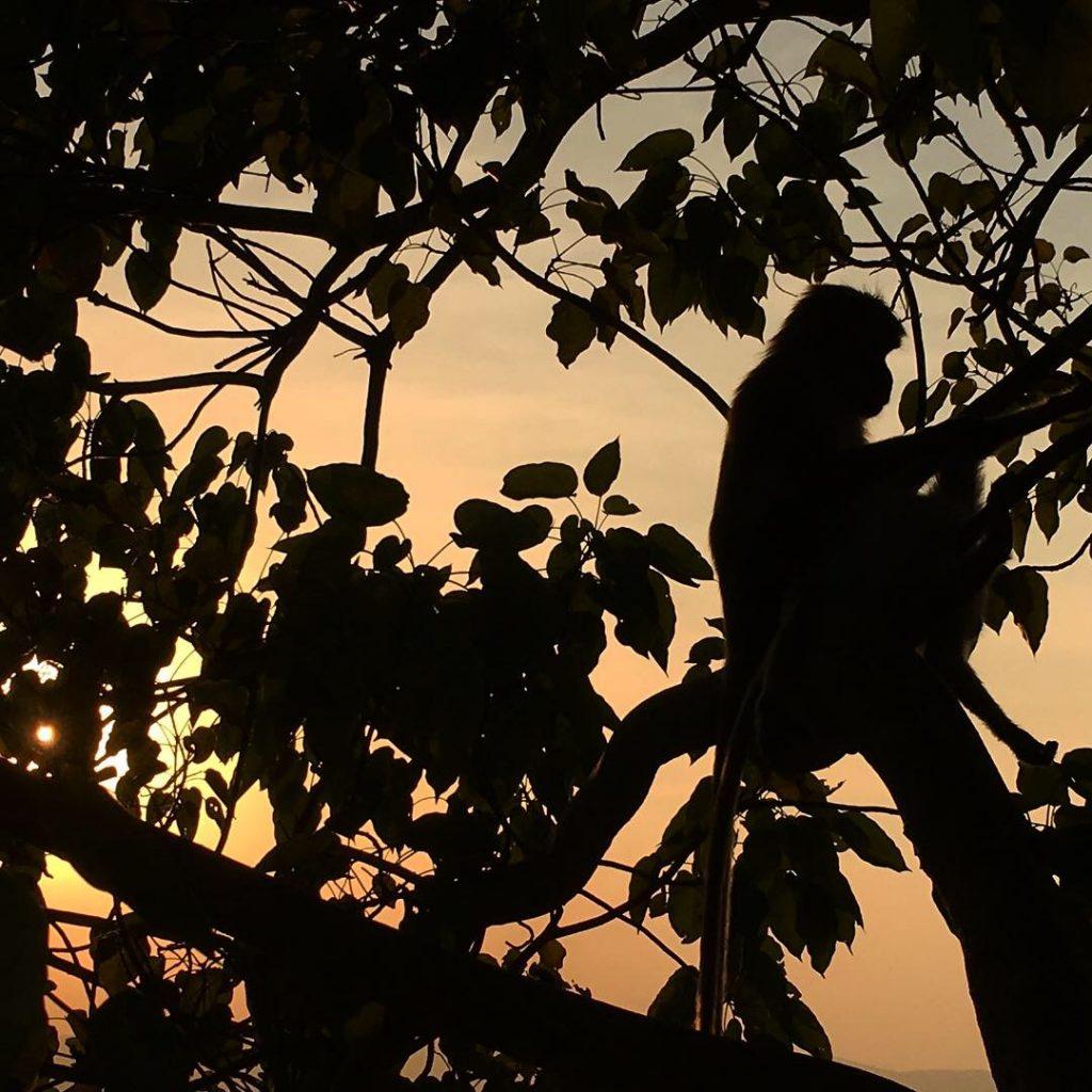 Zonsondergang vanaf de Sigiriya, leeuwenrots