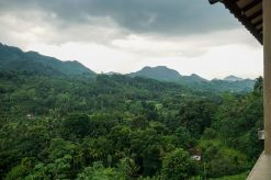 Sinharaja Rain Forest, Sri Lanka