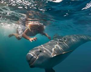 Swim with dolphins in Australia #swimwithdolphins #dolphins #wilddolphins #australia #waterexperiences