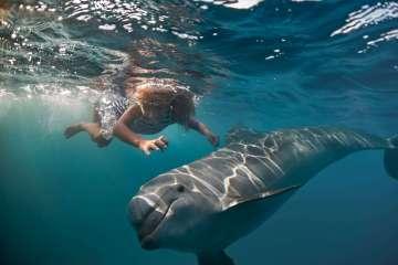 Swim with dolphins in Australia #swimwithdolphins #dolphins #wilddolphins #australia #waterexperiences
