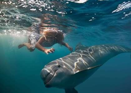 Swim with wild dolphins in Australia #swimwithdolphins #dolphins #wilddolphins #australia #waterexperiences
