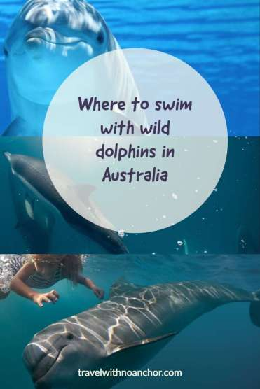 Swimming with wild dolphins in Australia #swimwithdolphins #dolphins #wilddolphins #australia #waterexperiences