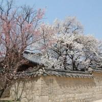 Viaggio in Corea: 2 giorni a Seoul