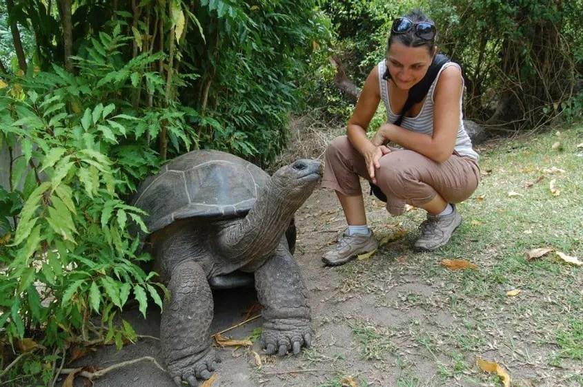 tartaruga incontrata per strada alle Seychelles