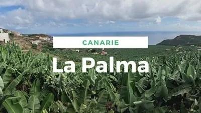 Banner La Palma