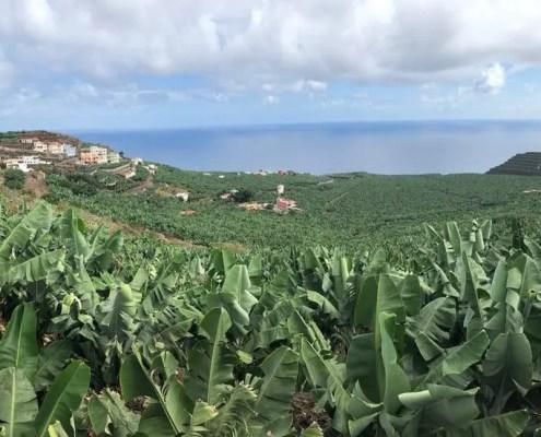 bananeti di La Palma