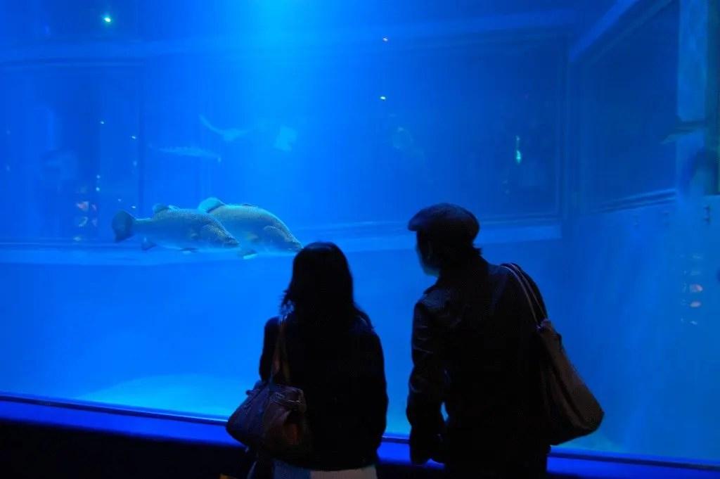 acquario Osaka