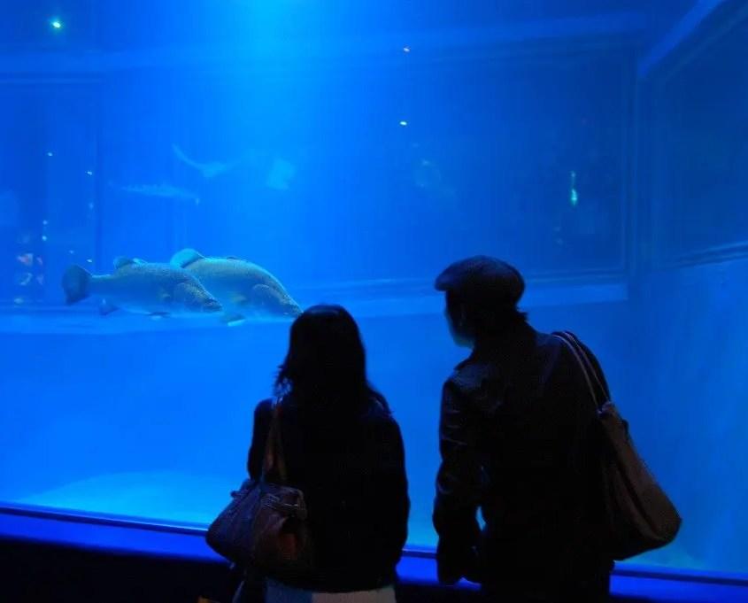 osaka acquario
