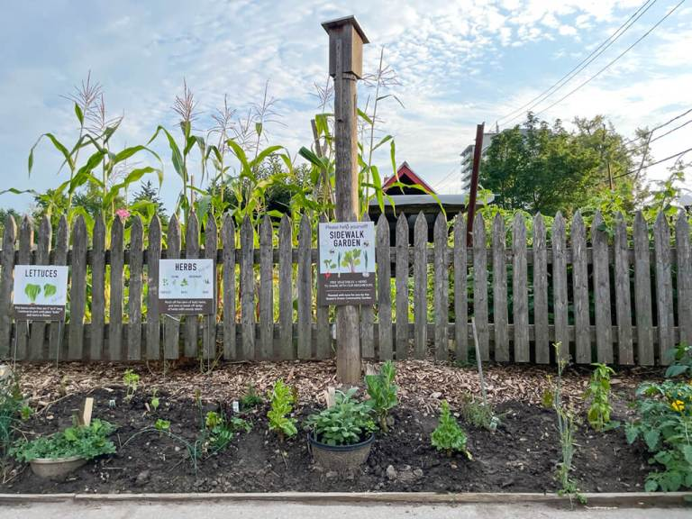Edible Sidewalk Garden Kitchener