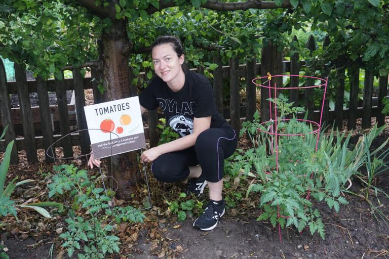 Queen's Green Community Garden Tomatoes