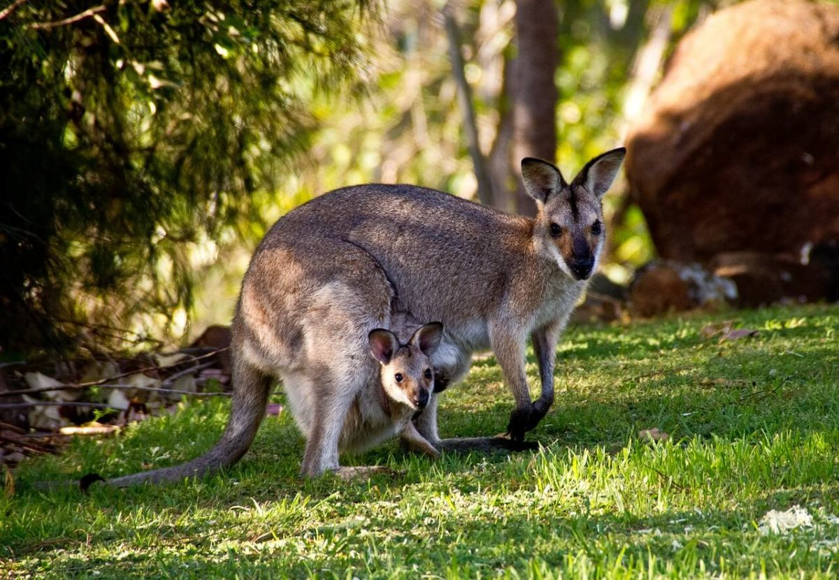 Kangaroo Working Holiday Visa