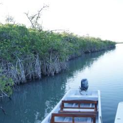 Mangroves 4