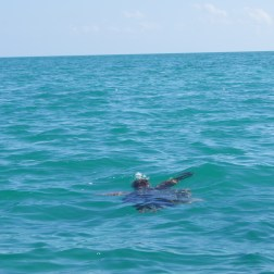 """Large 'white' sea turtles are in the area near the town of """"Punta Allen."""" Tours are offered in the town to see them, crocodiles, eagles, and dolphins. Snorkeling is also available."""