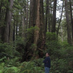 """An average redwood compared to me (I'm 5'11"""")"""
