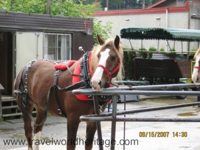 One of the rookie horses in Stanley Park, Vancouver.