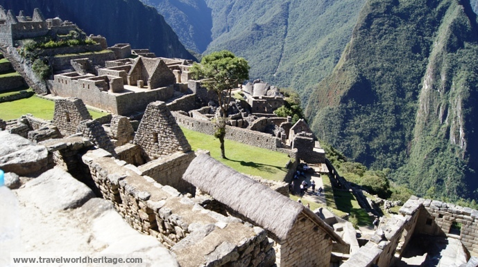 Flower, - Machu Picchu