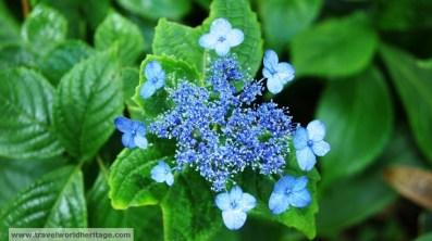 Flower on Halla