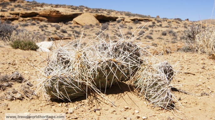 Chaco Cactus - USA Road Trip
