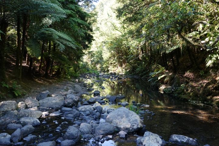 River in Hunua Ranges