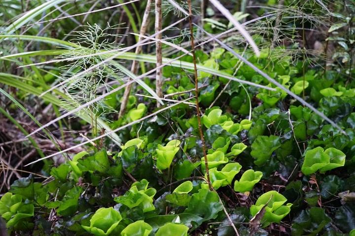 Plants in Hunua Ranges