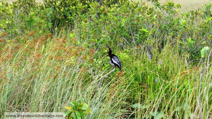 Birds in the Everglades