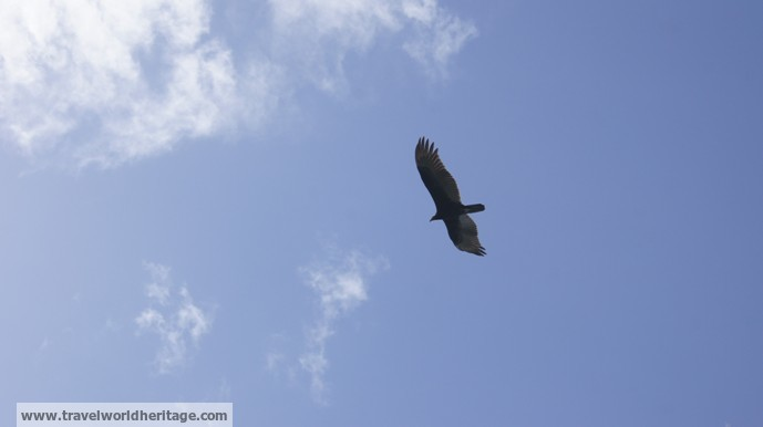 Eagle Everglades NP