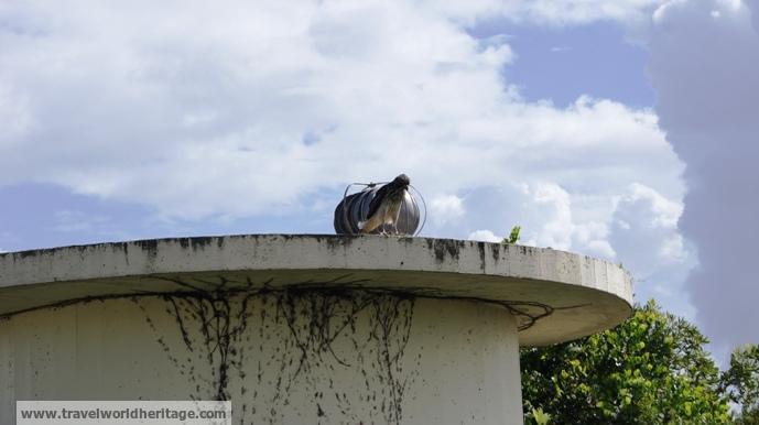 The thinking eagle.