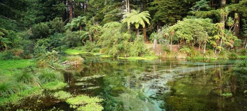 Rotorua is Freakin' Awesome!