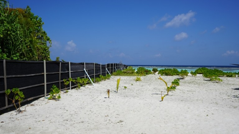 Wall along Dhangethi's Bikini Beach.