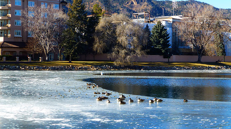 Ducks at Broadmoor Resort Lake