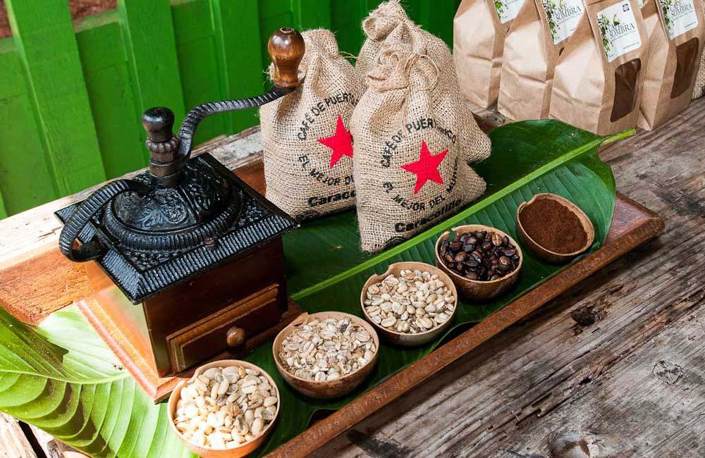 coffee-beans-hacienda-buena-vista-puerto-rico