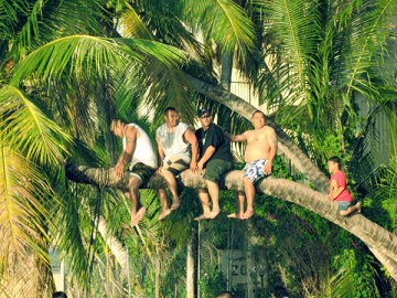 Local boys sitting on a coconut tree