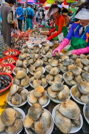 Clams at the fish market, Busan