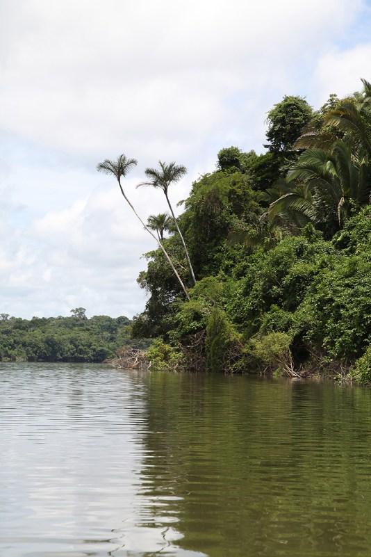 "Roosevelt River, once called ""Rio de Duvida"" (River of Doubt). Photo credit: Jeffrey Lehmann"