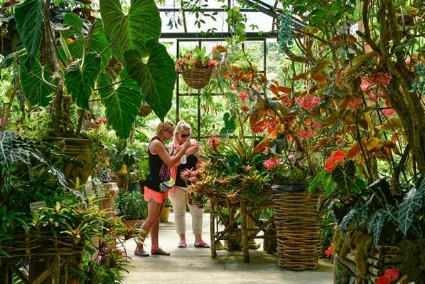 Visitors photographing exotic plants at Vallarta Botanical Garden, Puerto Vallarta, Mexico.