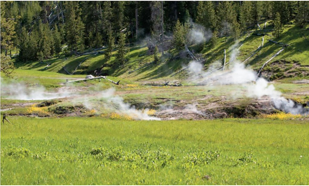 Steaming Meadow, Yellowstone National Park
