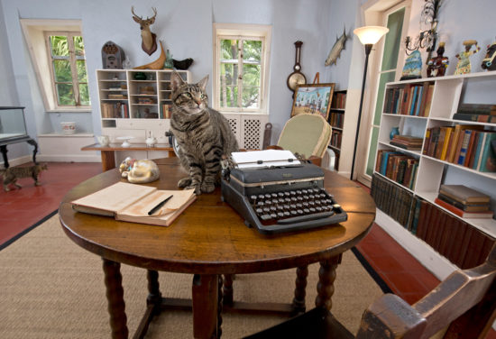 Cat next to typewriter