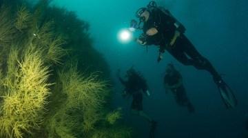 Sea of Cortez Wall Dive