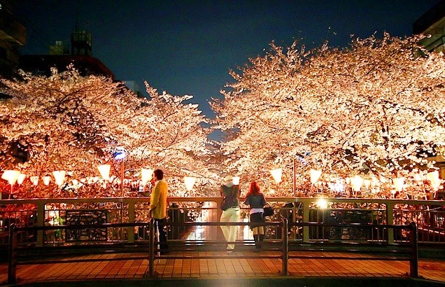 Hanami at night by Danny Choo