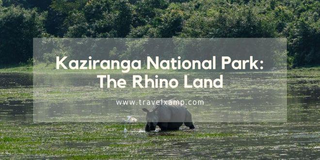 Kaziranga National Park: The Rhino Land
