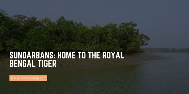Sundarbans: Home to the Royal Bengal Tiger