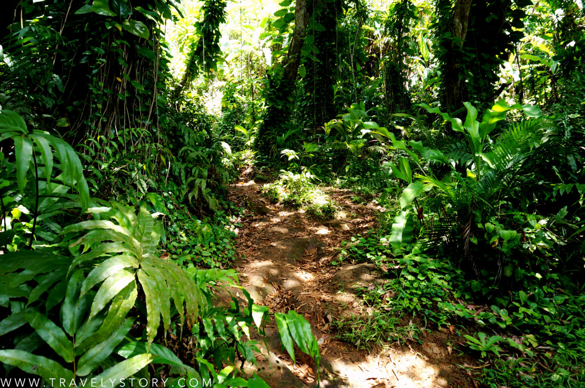 travely-story-incontournables-guadeloupe-25