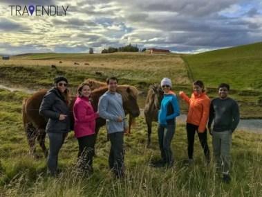 Group Icelandic horse posing