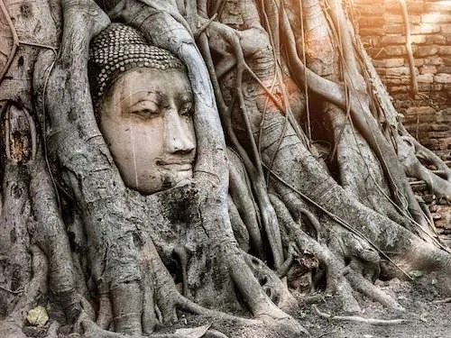 Ayutthaya Buddha in Tree Roots at Wat Mahathat Ayutthay