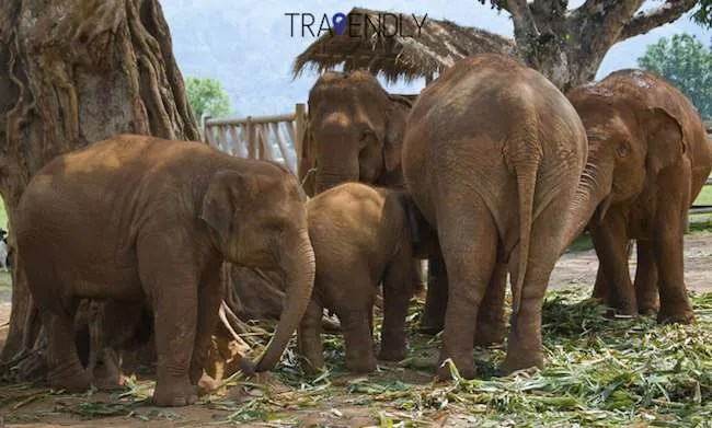 Family of elephants at a sanctuary